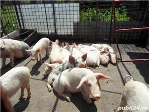 Porc 100 kg - imagine 2