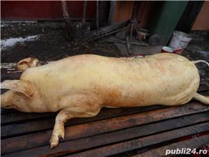 Porc 100 kg - imagine 4