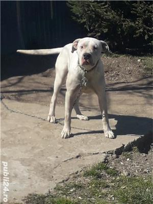 Vand dog argentinian  - imagine 1