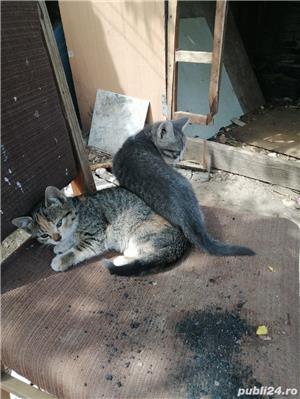 Pisicute - imagine 4