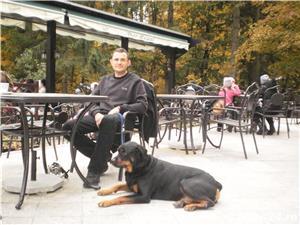 Dresaj canin / Plimbari - imagine 3