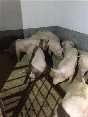 Porci de carne  - imagine 4