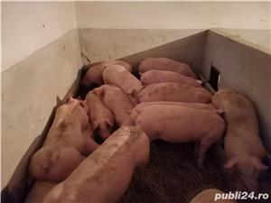 Vând porcii!!!  - imagine 2