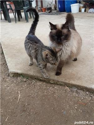 Pisici - imagine 1