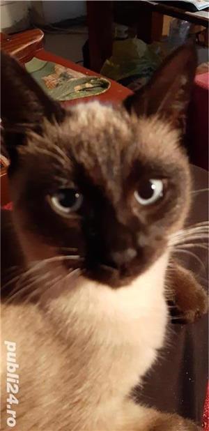 Pisici - imagine 4