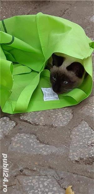 Pisici - imagine 5
