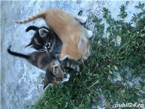 Pisici spre adoptie - imagine 2