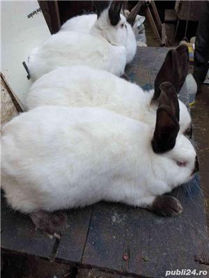 iepuri - imagine 2