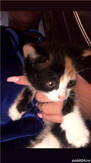 Dau spre adopție 4 pisicuțe care au aproximativ 3 săptămâni - imagine 4
