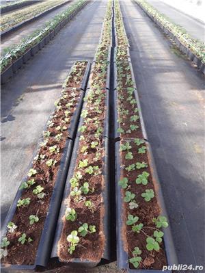 Cautam personal la productia de plante in Olanda - imagine 5
