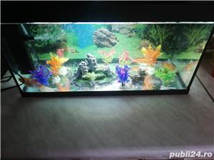 acvariu pesti + accesorii - imagine 1