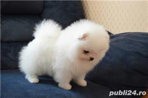 Pomeranian mini Toy. Mini Ursulet.  - imagine 1