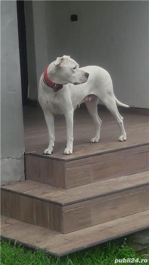 Dog argentinian - imagine 4