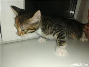 Pui de pisică - imagine 4
