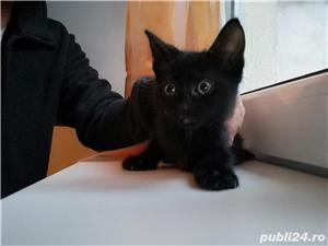Pui de pisică - imagine 2