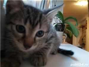 Pui de pisică - imagine 3