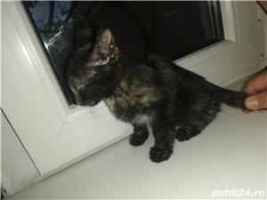 Pui de pisică - imagine 5