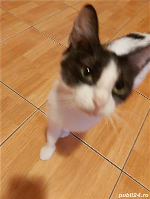 Donez pisică sterilizata - imagine 1