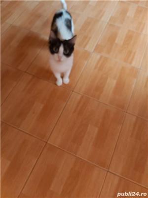 Donez pisică sterilizata - imagine 2