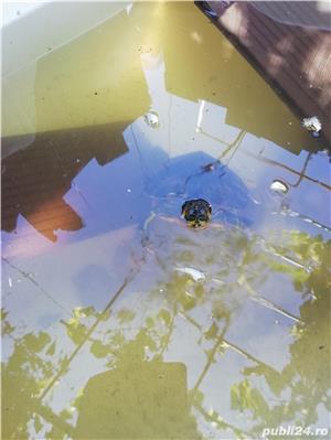 Vând broască țestoasă de apa europeana  - imagine 3