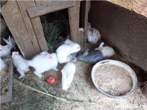 Vand iepuri mici - imagine 2