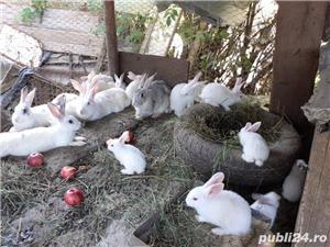 Vand iepuri mici - imagine 1