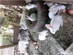 Vand iepuri mici - imagine 5