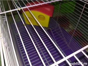 Cusca hamsteri  - imagine 4