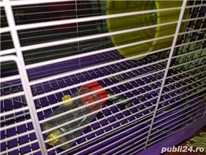 Cusca hamsteri  - imagine 3