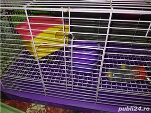 Cusca hamsteri  - imagine 2