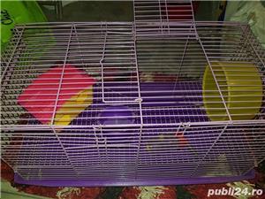 Cusca hamsteri  - imagine 1