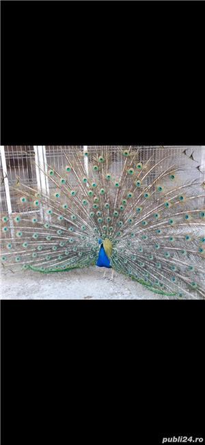 Păsări Exotice  - imagine 3