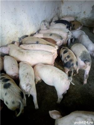Purcei de carne  - imagine 2