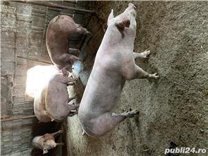 Vând porci crescuți BIO  - imagine 1