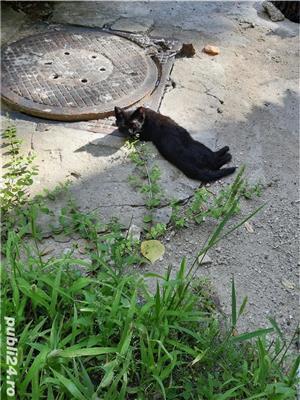 Pisicute - imagine 3