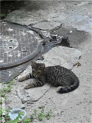 Pisicute - imagine 1