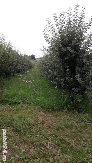 Berchez, vand un hectar livada cu pomi, loc deosebit, bun si pt. casa de vacanta, 450 euro/ar - imagine 5