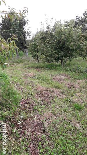 Berchez, vand un hectar livada cu pomi, loc deosebit, bun si pt. casa de vacanta, 450 euro/ar - imagine 9