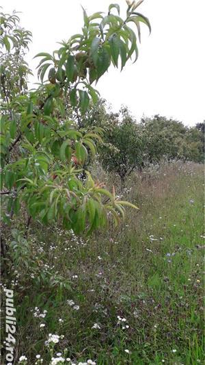 Berchez, vand un hectar livada cu pomi, loc deosebit, bun si pt. casa de vacanta, 450 euro/ar - imagine 3