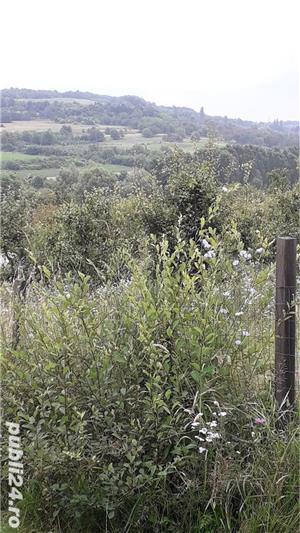 Berchez, vand un hectar livada cu pomi, loc deosebit, bun si pt. casa de vacanta, 450 euro/ar - imagine 8