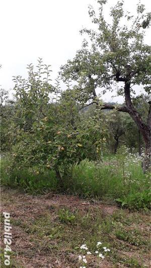 Berchez, vand un hectar livada cu pomi, loc deosebit, bun si pt. casa de vacanta, 450 euro/ar - imagine 4