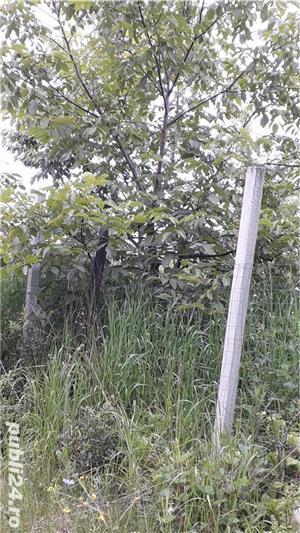 Berchez, vand un hectar livada cu pomi, loc deosebit, bun si pt. casa de vacanta, 450 euro/ar - imagine 7