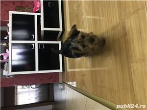 Vand Yorkshire Terrier - imagine 3