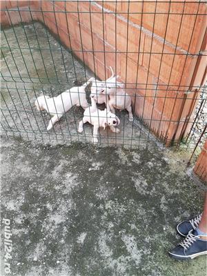 Câini - imagine 4