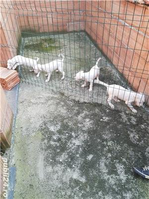 Câini - imagine 2