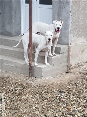 Câini - imagine 1