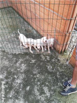 Câini - imagine 3
