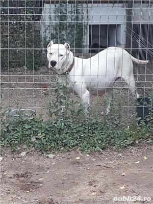 dog argentinian - imagine 5