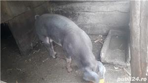 porci de carne - imagine 2