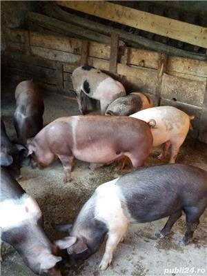 Porci, purcei - imagine 3